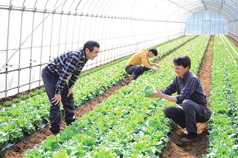 大地を守る会 農家 レタス