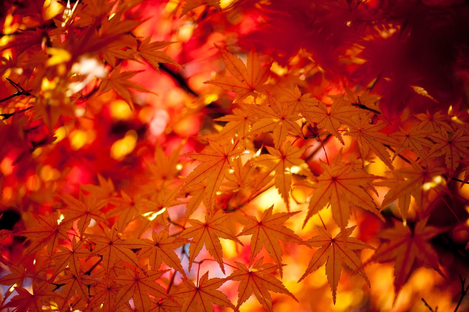 【お取り寄せも可】茨城県水戸市の熟成焼きいも専門店「あづまや」を紹介するよ!!